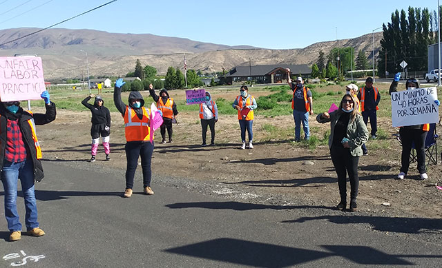 Strikers at Allan Bros. packinghouse in Naches,                 Washington, on May 8. (Internationalist photo)
